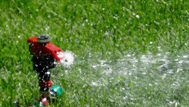 Use a sprinkler to water your garden