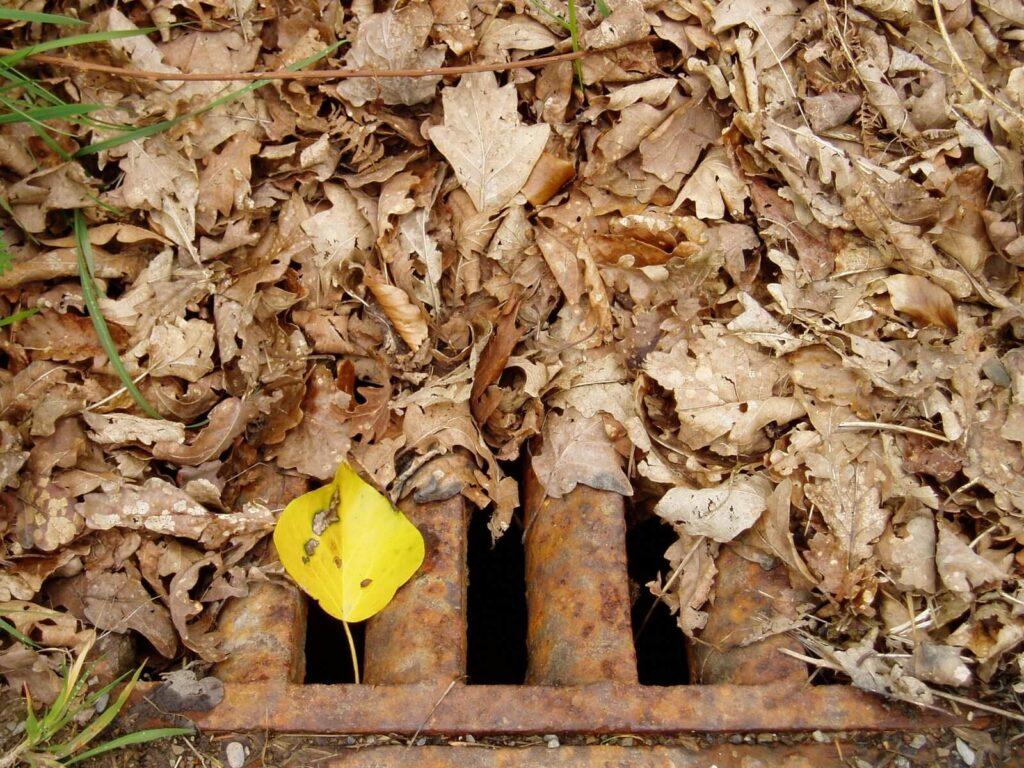 Leaves Blocking Storm Drains